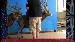 Here Comes Santa Claus, His Sleigh & Reindeer, Sled And Huskies - Life Size Christmas Display