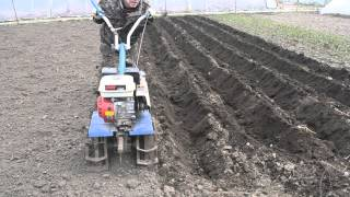 как посадить картошку с помощью мотоблока
