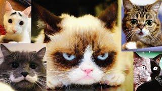 Их любят все: ТОП-12 инстаграм-аккаунтов самых популярных котов и кошек