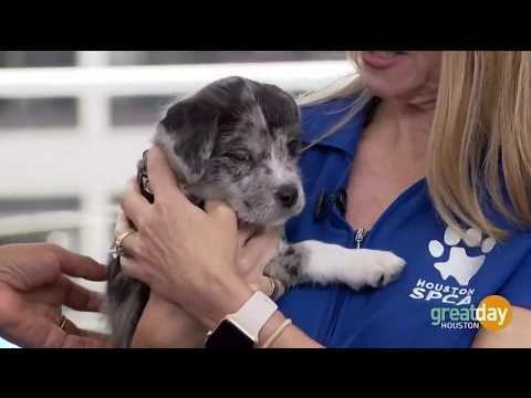 What To Know Before You Adopt A Pet