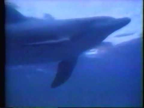 """WONDER WOMAN 1978 """"The Deadly Dolphin"""" promo"""