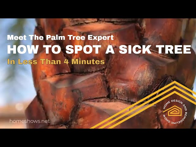 How To Spot A Sick Palm Tree | QUICK TIP