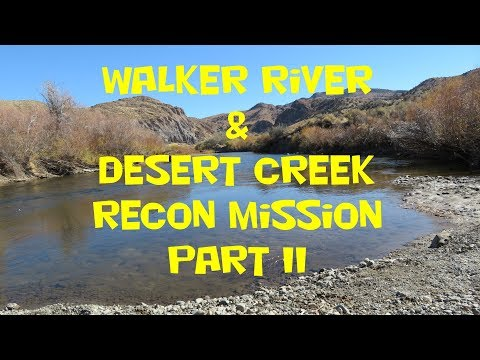 Walker River & Desert Creek Fishing Recon Mission Part 2