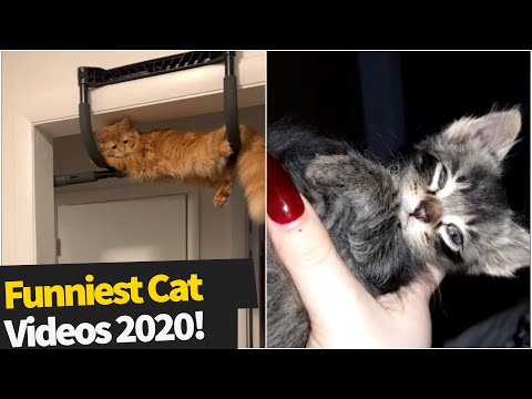 40 Hilarious Cat Viral Videos | Ultimate Cat Compilation Of 2020 So Far