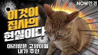 [유튜버탐구생활] 고양이와 함께하는 생활(매운맛?), …