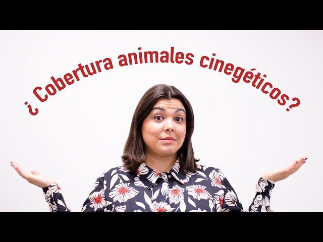 Tus seguros al día: impacto con animales