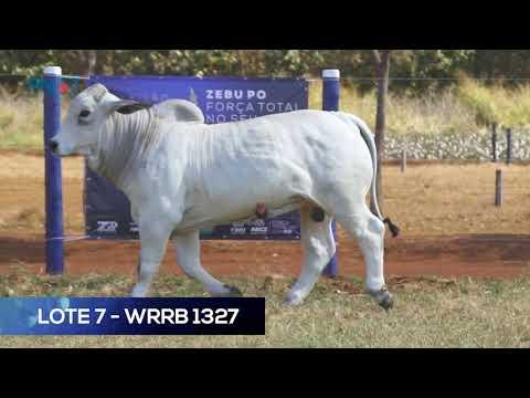 LOTE 7 - WRRB 1327 - BRAHMAN
