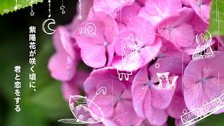【n.k】When the hydrangeas bloom, I fall in love with you - eng sub【Hatsune Miku】