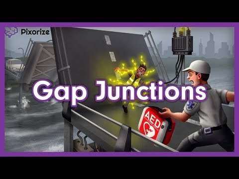Gap Junctions MCAT Mnemonic Preview