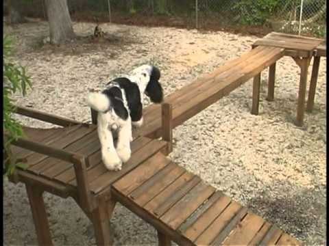 Dog Obstacle Confidence Course