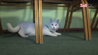 Вор вынес из квартиры читинки электронику, украшения и домашнюю кошку.