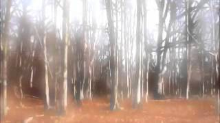 Meditation Music - Silent Forest [432 Hertz]