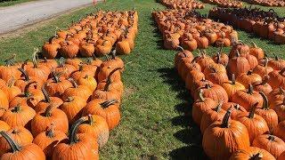 How to Fertilize Pumpkins - Pumpkin Field Fertilizing Amazing Technology