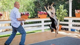 Home & Family - Extreme Dog Tricks With Omar Von Muller & Jumpy The Dog