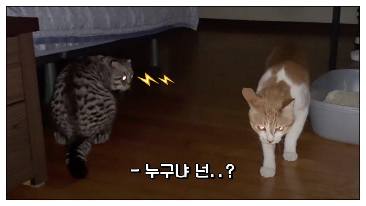 고양이를 처음 본 고양이들