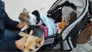 особое отношение немцев к животным/сколько стоит содержание домашних животных