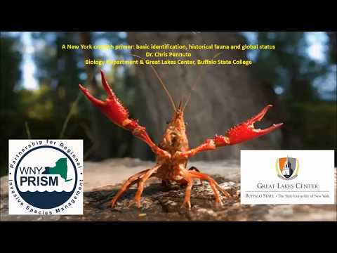 A New York Crayfish Primer: Basic Identification, Historical Fauna And Global Status (May 2018)