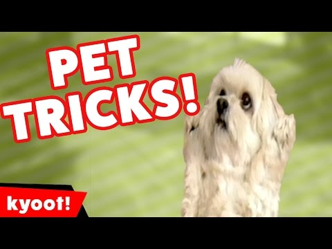 The Funniest Amazing Stupid Pet Tricks of 2016 Weekly Compilation | Kyoot Animals