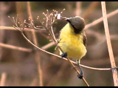 birds of bangalore