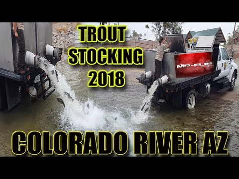 Trout Stocking Colorado River AZ  (2K Trout Stocked)