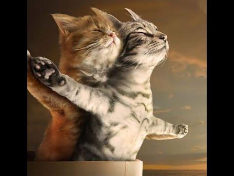 Необыкновенно смешные кошки!
