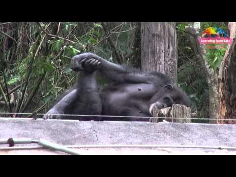 「風災過後」全體總動員 - 動物園明重新開放 After Typhoon Taipei Zoo Opens Tomorrow