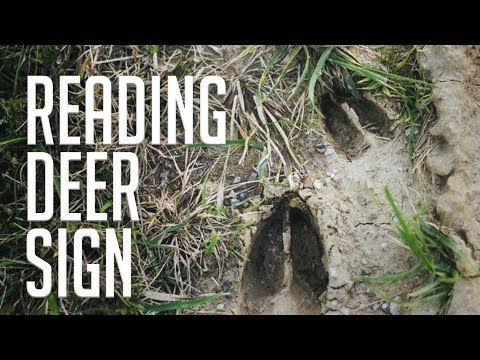 How To Identify And Understand Deer Sign!