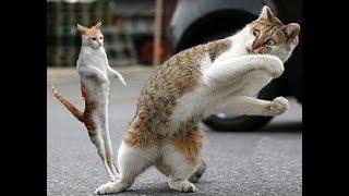 Cats are so funny you will die laughing  حركات قطط رهيبه تموت من الضحك