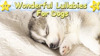 Lullaby For Husky Puppies Dogs Pets ♫ Calm Relax Your Dog ♥ Sleep Music For Huskies Animal Music
