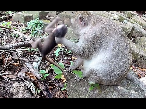 Real life of baby monkey - Cute animals and Pets compilation