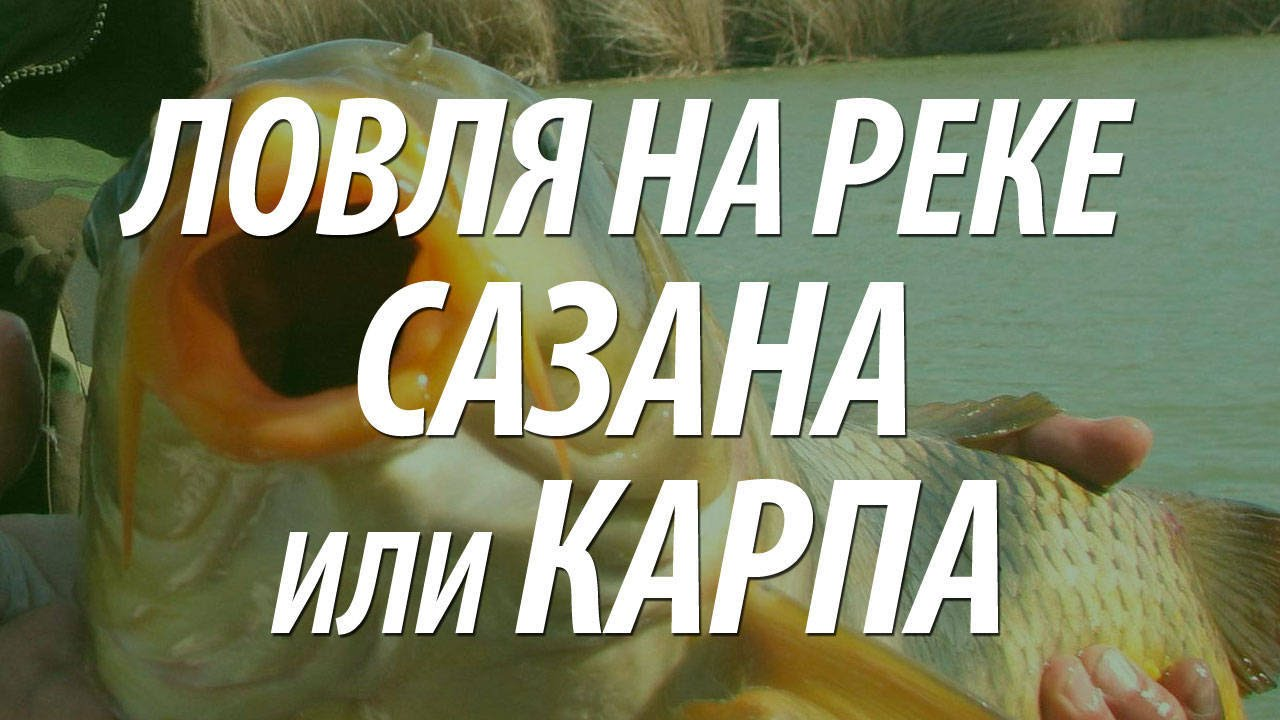 19 май 2015. Самый верный способ купить свежую рыбу — купить ее живой. В некоторых. Она имеет свежий, несильный аромат моря. Наличие. Осетр в аквариумах плавает, ну, и вышеупомянутый карп. Только вот не.