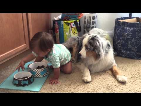 Adorable Baby Feeding her Australian Shepherd