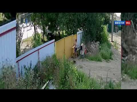 """Чаплин отдыхает  двое подростков совершили """"кражу года"""" на Кубани   Россия 24"""