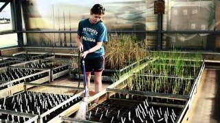 RiceTec   Revolutionizing rice production to feed a growing world HD