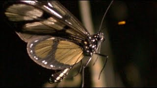 Butterfly Takeoff at 2,000 Frames per Second - Smarter Every Day 79