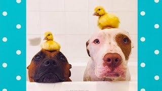 Funny Dogs Meeting Cute Baby Animals | Funny Pets