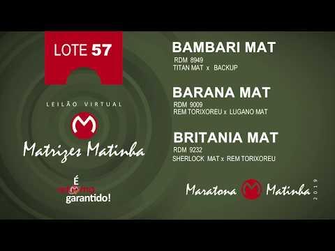 LOTE 57 Matrizes Matinha 2019