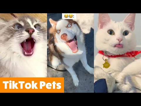 TOO CUTE! Tiktok Pets That Will Make You Smile | Funny Pet videos