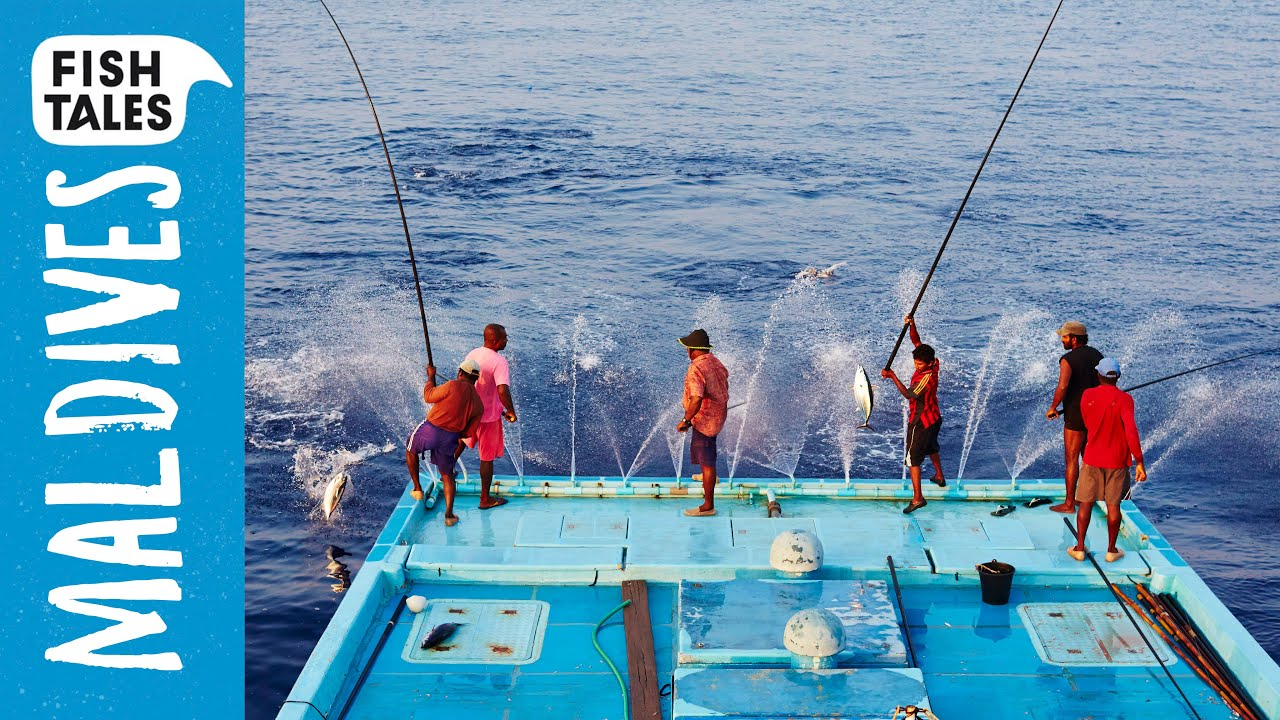 Sustainable Pole and Line TUNA Fishing in the Maldives | Bart's Fish Tales