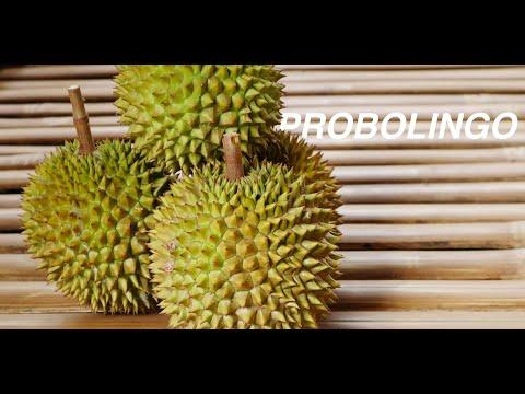 Jawa Pos Belah Durian Edisi 8: Durian Branggah Probolinggo