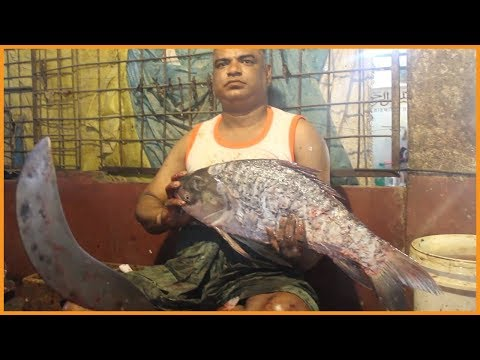 Crap Rohu Fish Cutting in Fish Market By Bengali Style Fishmonger | Carp Fish Clean & Fillet Videos