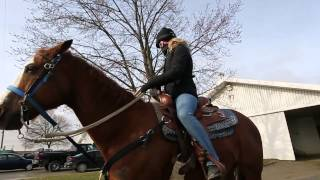Preparation for the 57th season of thoroughbred racing, which begins April 20, is underway at Woodbine Racetrack. Despite university degrees under her belt, trainer Katerina Vassilieva followed her love of horses and hasn't looked back since.