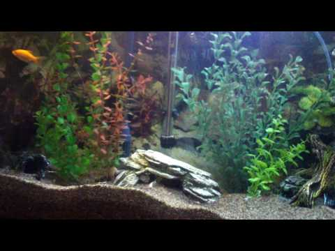 75 Gallon Turtle Tank Set Up, Homemade Basking Deck | How To Save