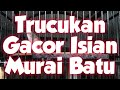 Trucukan Lokal Cilacap Gacor Ngropel Isian Murai Batu Gacor(.mp3 .mp4) Mp3 - Mp4 Download