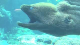Аквариумные рыбы Морской аквариум Relax