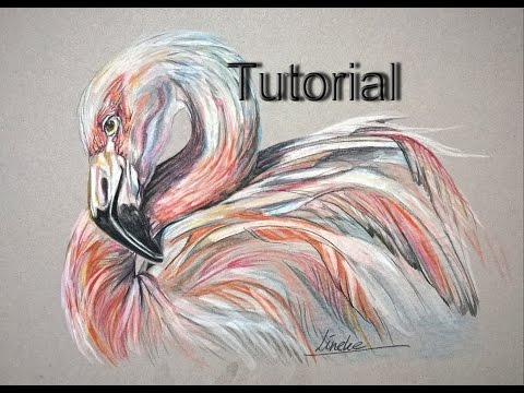 Drawing a FLAMINGO Bird with color pencils - easy tutorial