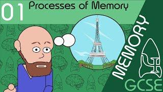 Processes of memory - Memory, GCSE Psychology [AQA]