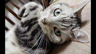 あまりの恐怖から飼い主が誰だか判別不能に陥った猫… 災難が去ることをひたすら願う -The Stranger froze My Cat