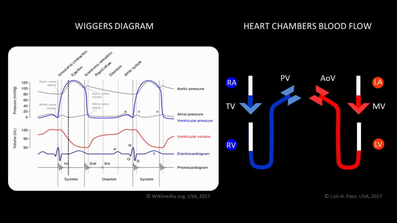 Wiggers paez animated cardiac diagram youtube wiggers paez animated cardiac diagram pooptronica
