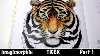 TIGER part 1 | IMAGIMORPHIA | Prismacolor | speed coloring